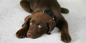 Carpet Pet Stain Cleaning